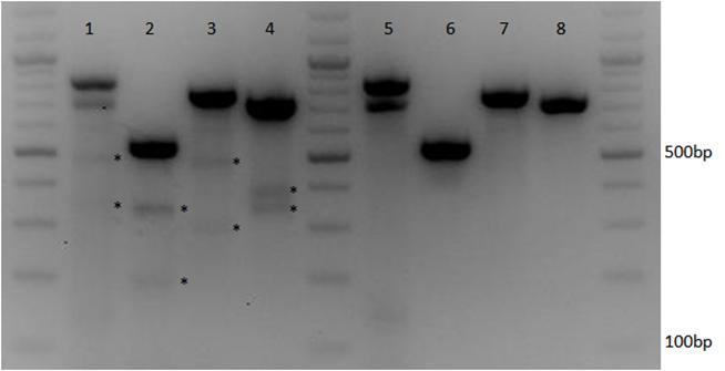 CRISPR-Cas9_multiplexing_to_target_multiple_genes