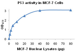 MCF-7 Nuclear Lysates